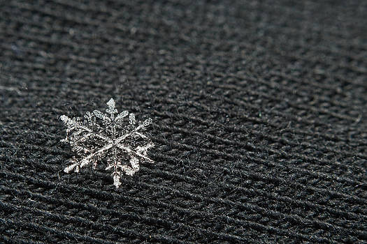 Snowflake on Black by Jaci Harmsen