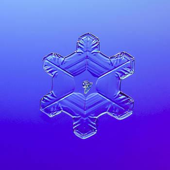 Tom Biegalski - Snowflake on blue