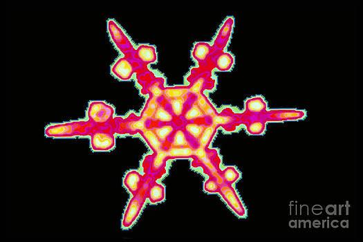 Scott Camazine - Snowflake