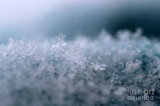 Snowflake Symphony by Stacey Zimmerman