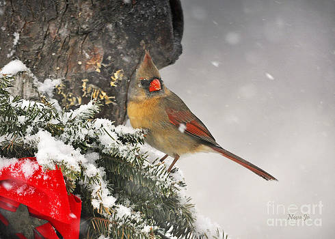 Female Cardinal Snowing by Nava Thompson
