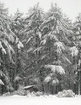 Snowstorm in the Woods by Suzanne DeGeorge