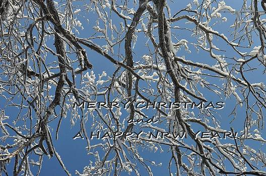 Snowy Branches Card by Diana Nigon