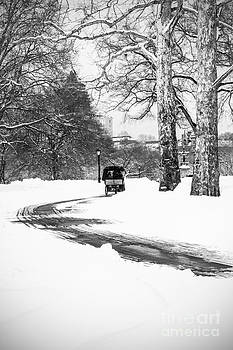 Snowy Carriage Ride in Central Park by Daniel Portalatin Photography