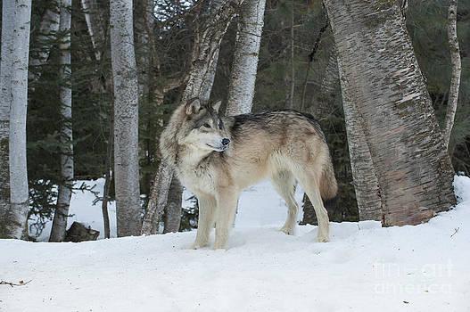 Sandra Bronstein - Snowy Day Trek