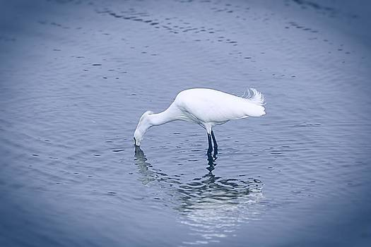 Snowy Egret by Patricia Davis