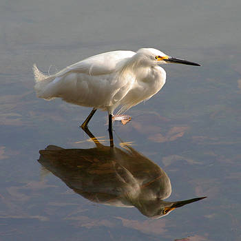 Snowy Egret Reflection by Bob and Jan Shriner