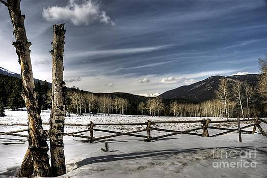 Snowy Field by Kasey Cline