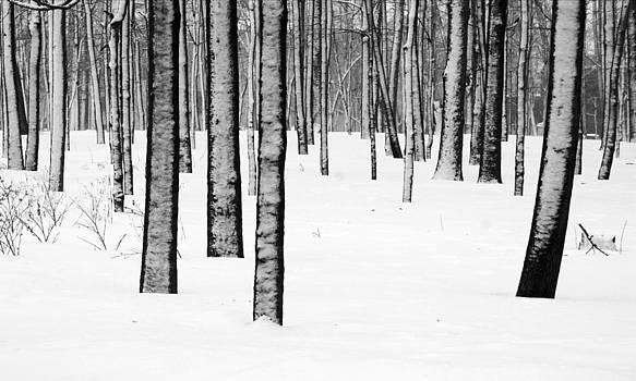 Arkady Kunysz - Snowy forest