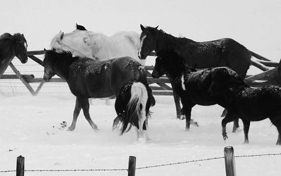 Snowy Hooves BW by Misty Ann Brewer