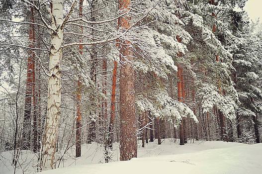 Jenny Rainbow - Snowy Memory of the Woods