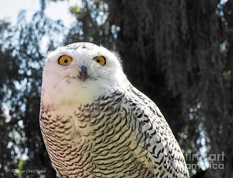 Barbara McMahon - Snowy Owl