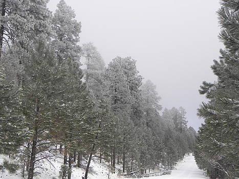 Snowy Road by Kyla Heath