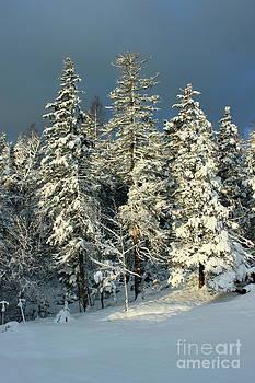 Snowy Sunrise by Jesslyn Fraser