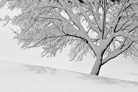 Snowy Tree by Jay Nodianos