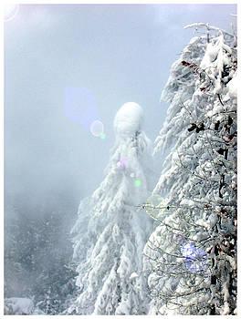 Kae Cheatham - Snowy trees
