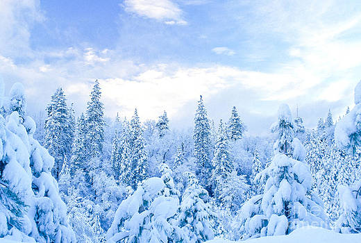 Richard and Ellen Thane - Snowy Trees
