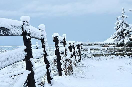 Snowy Winter by Lisa  DiFruscio