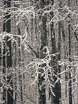 Snowy Woods by Carol Whaley Addassi