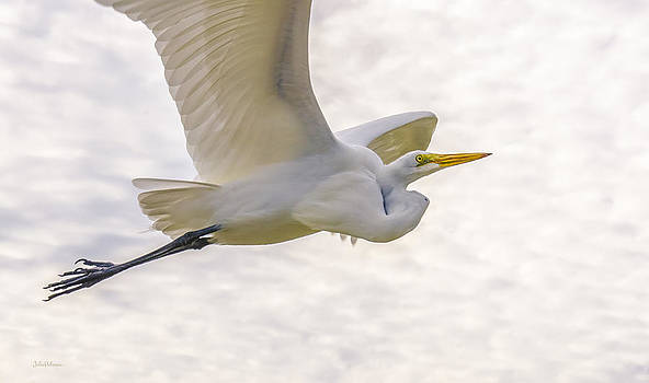 Julie Palencia - Soaring High Great Egret