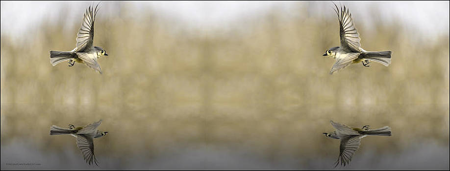 LeeAnn McLaneGoetz McLaneGoetzStudioLLCcom - Soaring souls fountain of youth