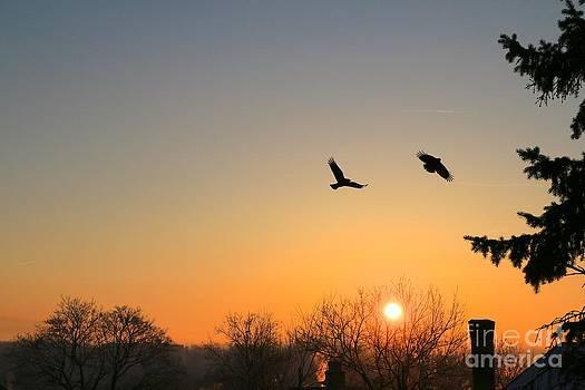 Soaring Sunrise 3 by Jay Nodianos