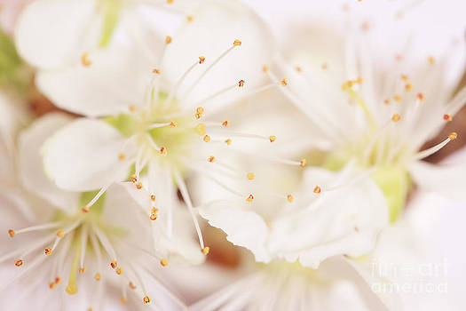 LHJB Photography - Soft and delicate