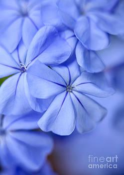 Sabrina L Ryan - Soft Blue