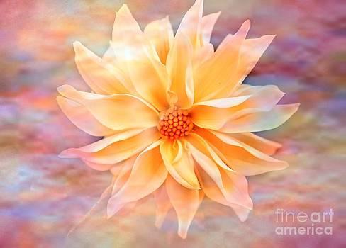 Soft Delightful Dahlia by Judy Palkimas