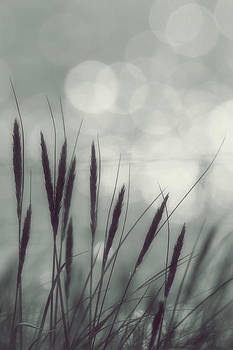 Soft Grass And Sea Shimmer Bokeh by Anne Macdonald