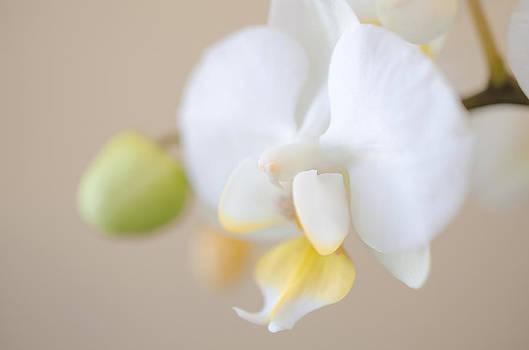 Soft Orchid on Pale Peach by Kelly Anderson
