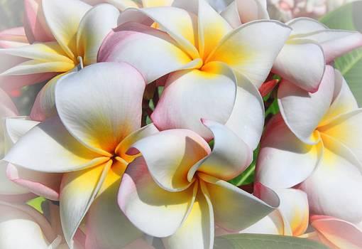 Soft Plumeria Natural Bouquet by DJ Florek
