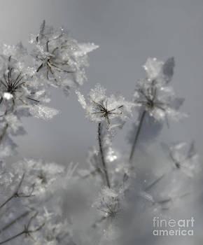 Nina Stavlund - Soft Winter Whisper..