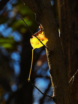 Solitary Leaf by Phil Penne