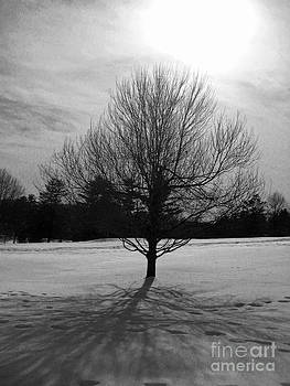 Solitary Wintry Tree by Lisa Jones