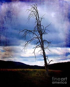 Solitude by Sharon Marcella Marston