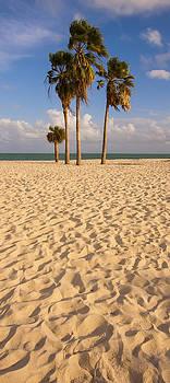 Adam Romanowicz - Sombrero Beach
