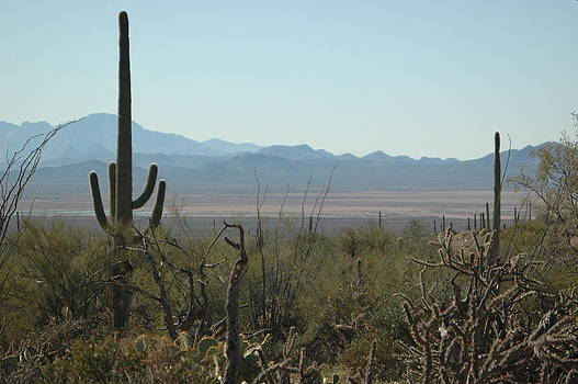 Sonora Desert View by Sheri Heckenlaible