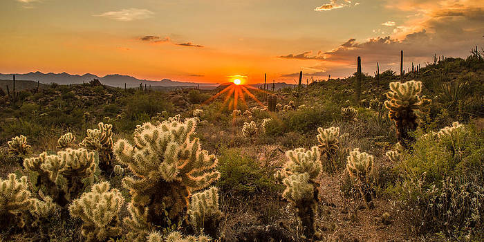 Sonoran Garden by JT Dudrow