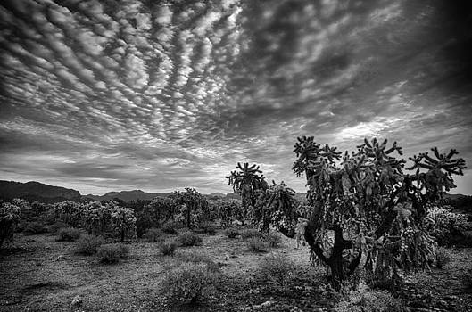 Saija  Lehtonen - Sonoran Skies at Dawn in Black and White