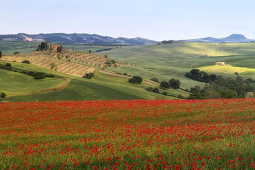 Sotto il sole della Toscana by Daniel Sands