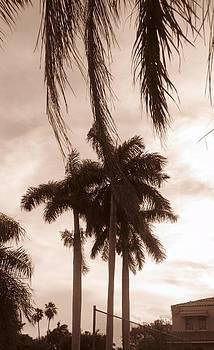 South Beach by Carmel Joseph