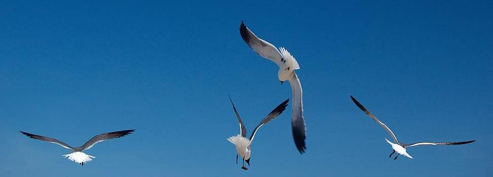 South Padre Seagull Dance by Bonita Hensley
