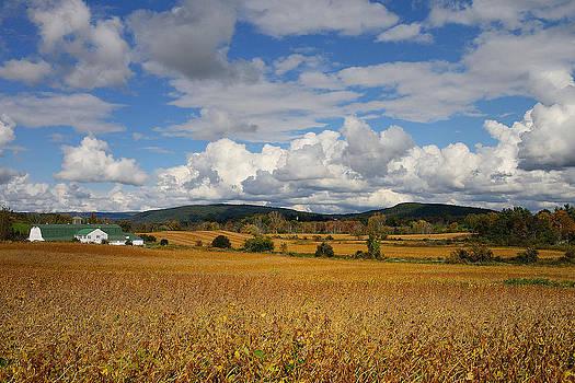 Soybean Fields by Charlene Palmer