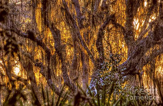 Dan Friend - Spanish moss at sunset