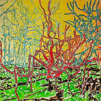 Spanish Oak by Ray  Petersen
