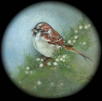 Sparrow by Diana L Hund