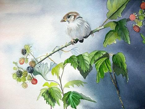 Sparrow by Stephanie Zobrist