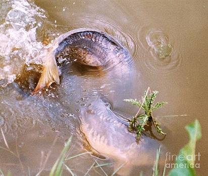 Spawning Time by John Williams