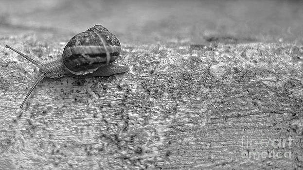 Speed by Giuseppe Ridino